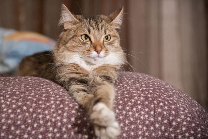 Chat sur canapé avec housse